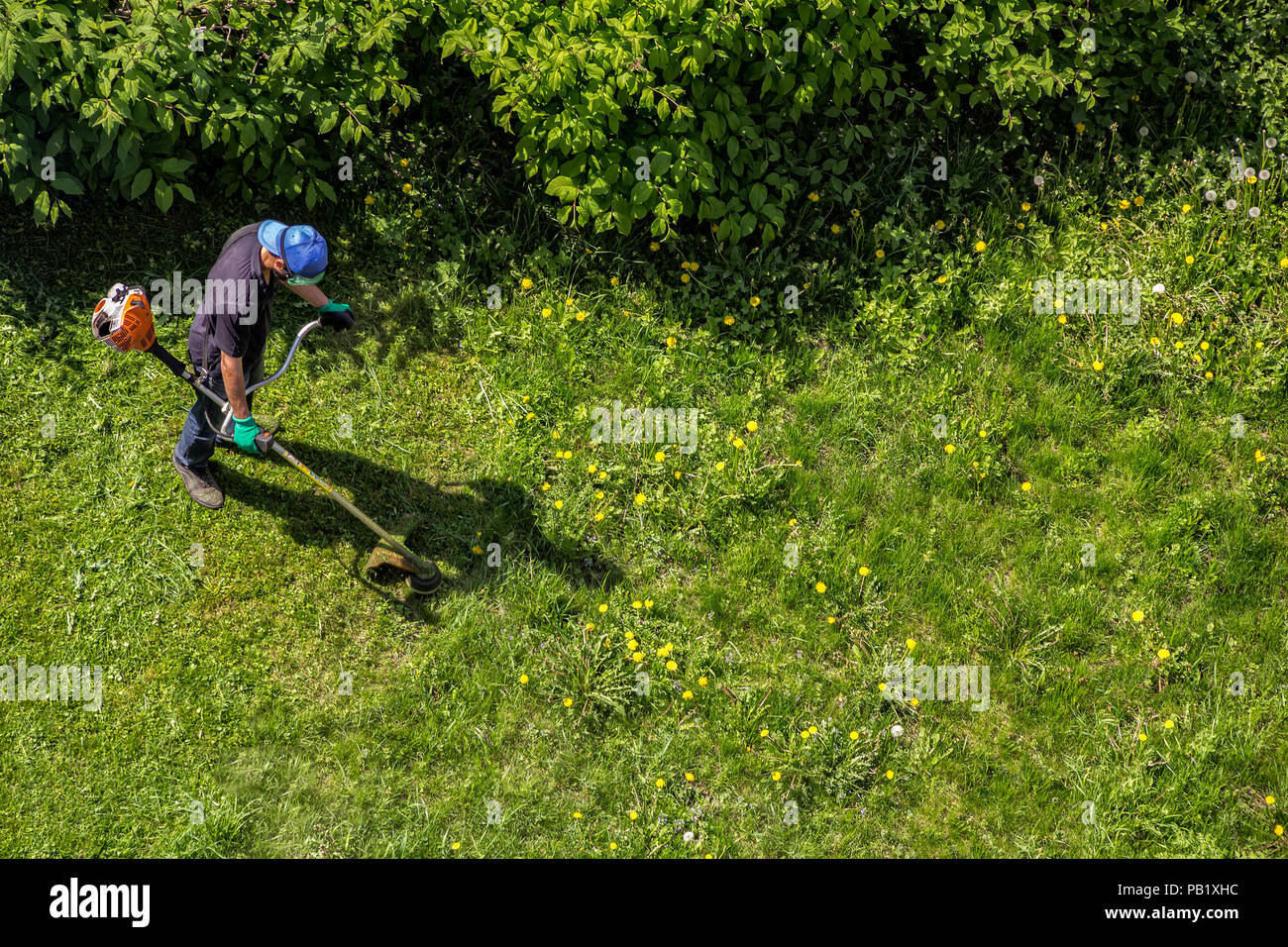 Male worker with power tool string lawn trimmer mower cutting grass, top view - Stock Image
