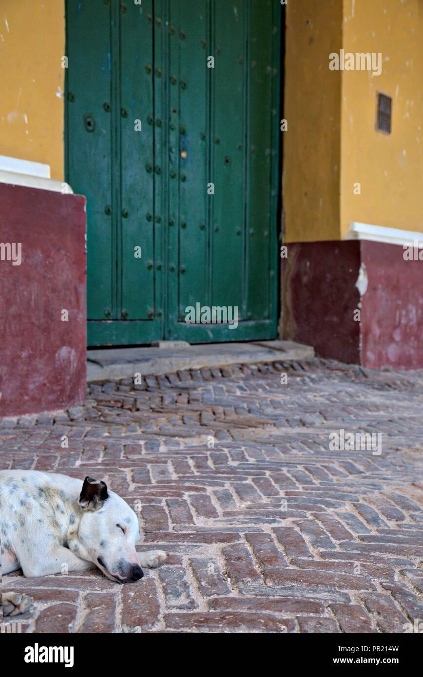 Street dog asleep on the cobbles in Trinidad, Cuba - Stock Image