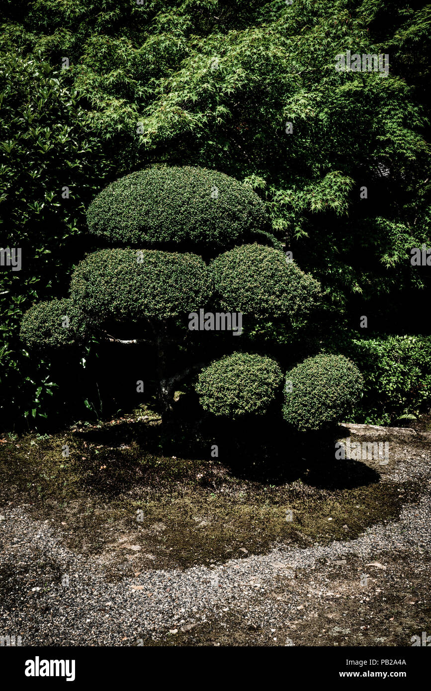 Conceived as works of art, Japanese gardens are meticulously tended. Nature is revered but highly manipulated. - Stock Image