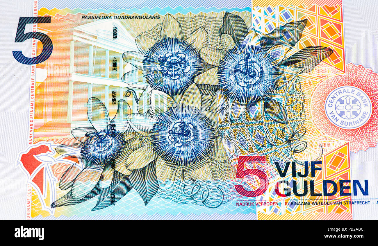 5 Surinamese gulden bank note. Gulden is the former currency of Suriname - Stock Image