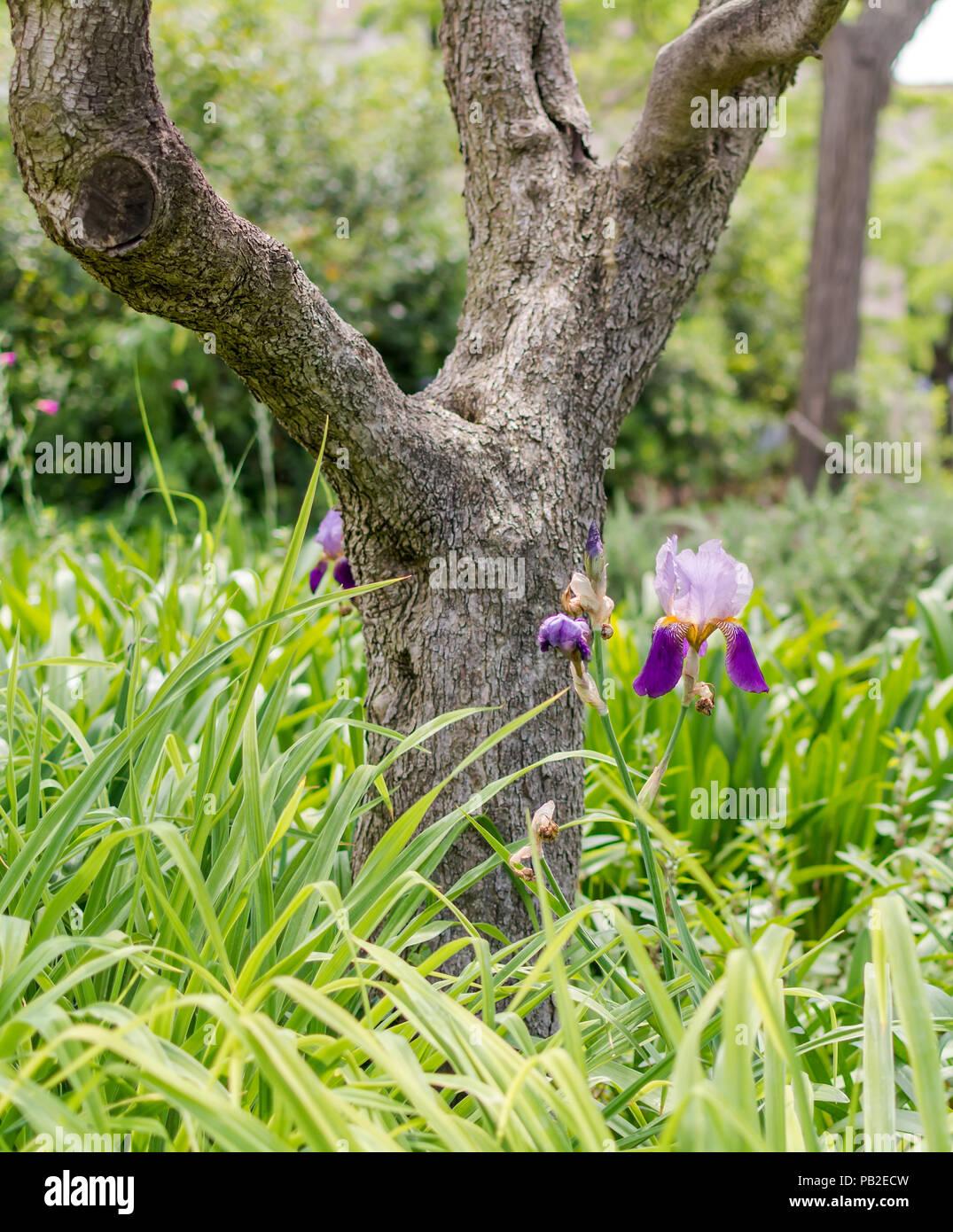 Flora Goddess Of Spring Stock Photos Flora Goddess Of Spring Stock