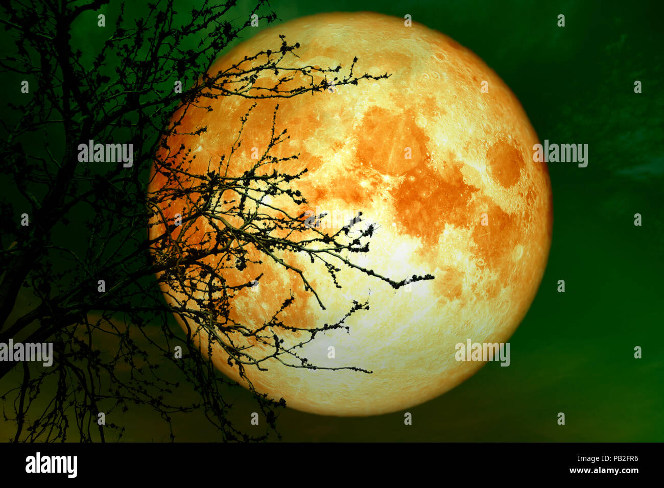 full blood moon near earth on night sky back silhouette dry branch tree, Elements of this image furnished by NASA - Stock Image