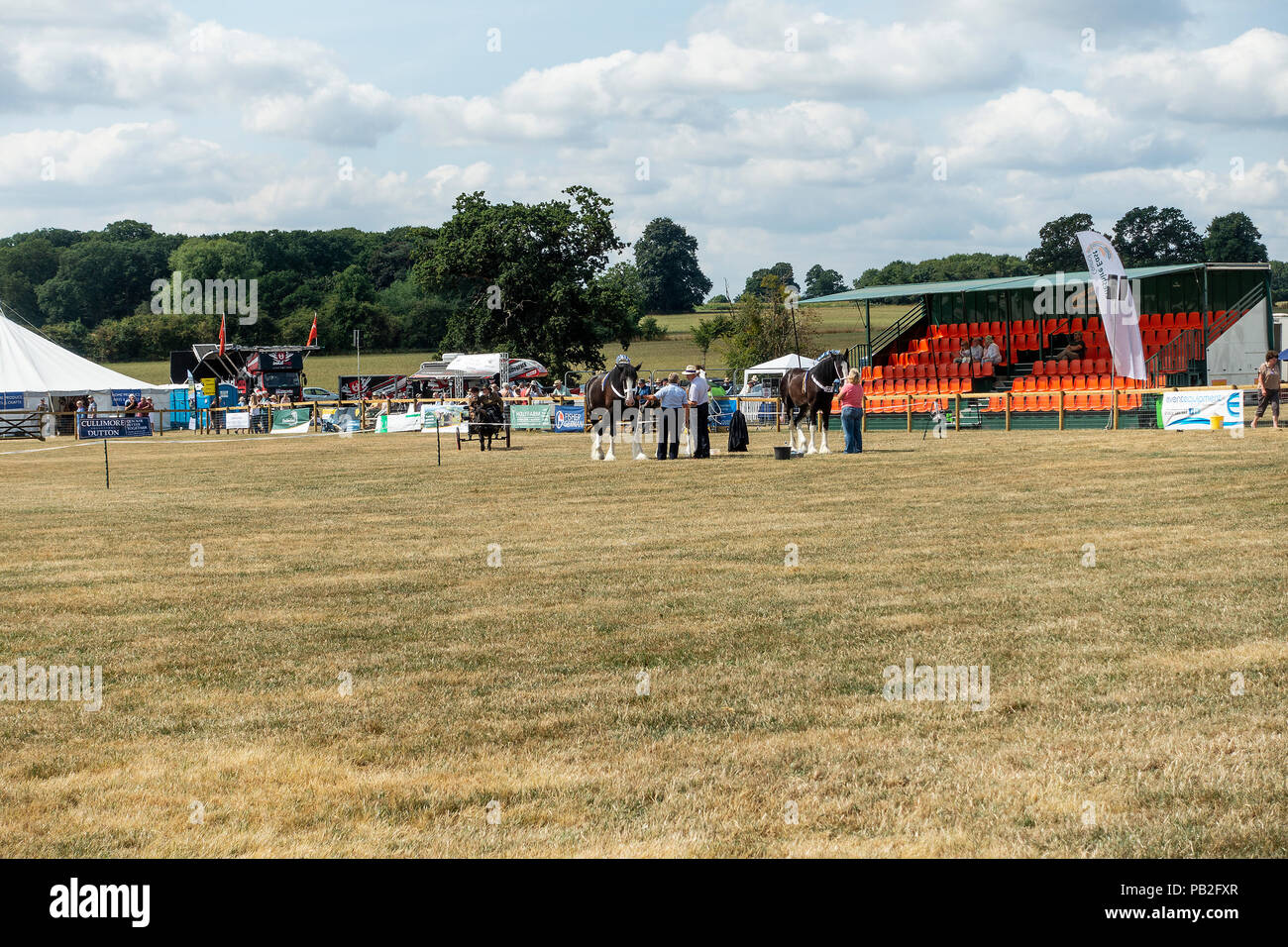 Shire Horses in the Show Ring in Competition at the Annual Nantwich Agricultural Show in Cheshire England United Kingdom UK - Stock Image