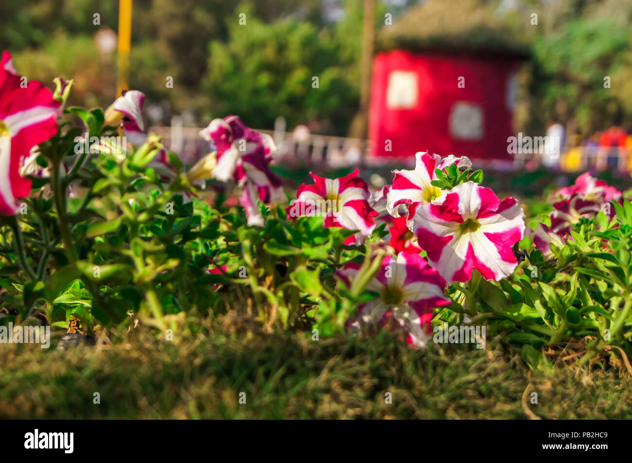 Beautiful Flower arrangements and decoration in the garden. Stock Photo