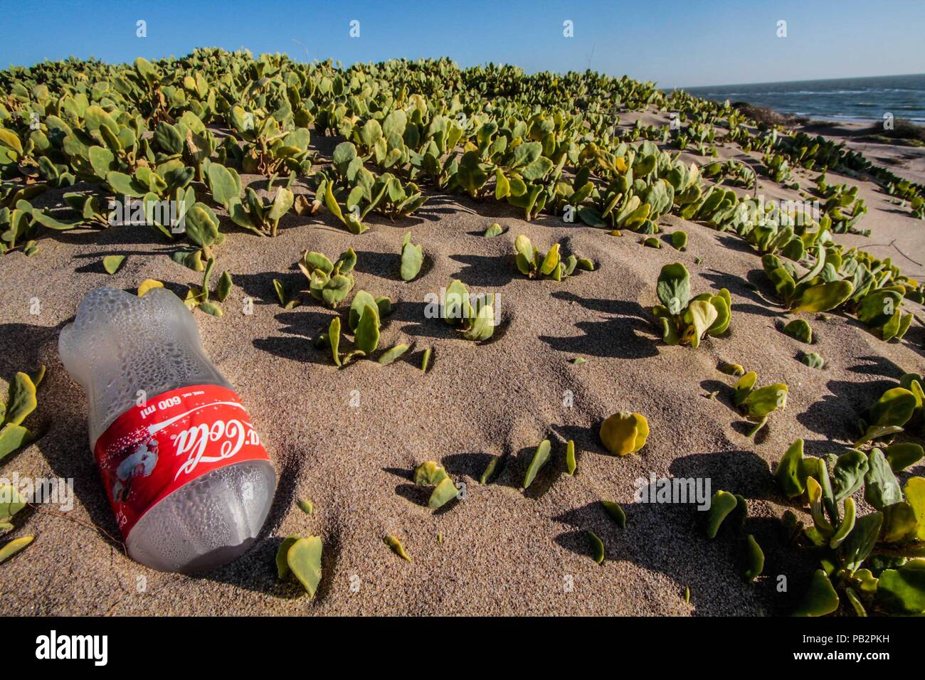 Empty plastic bottle of Coca Cola brand gas, cause of pollution and environmental impact. Sand dunes at Imalaya Beach in the vicinity of Kino Bay. - Stock Image