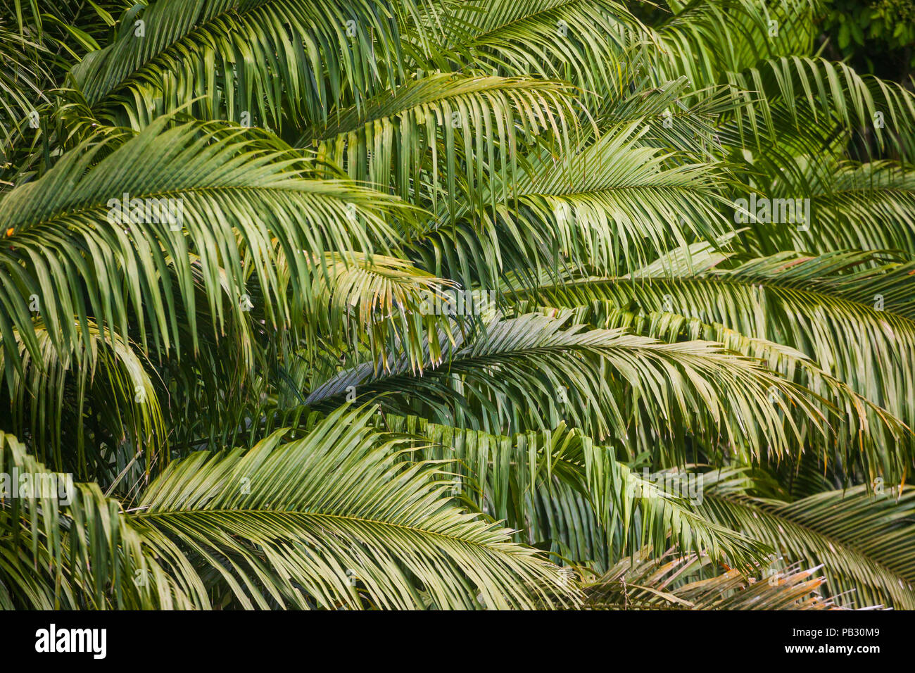 Palm leaves and branches at the lakeside of Gatun lake, Colon province, Republic of Panama. - Stock Image