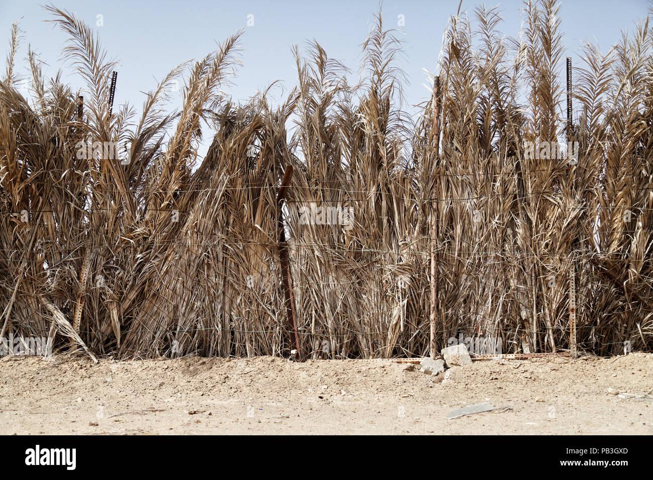 Barasti palm frond fencing - Stock Image