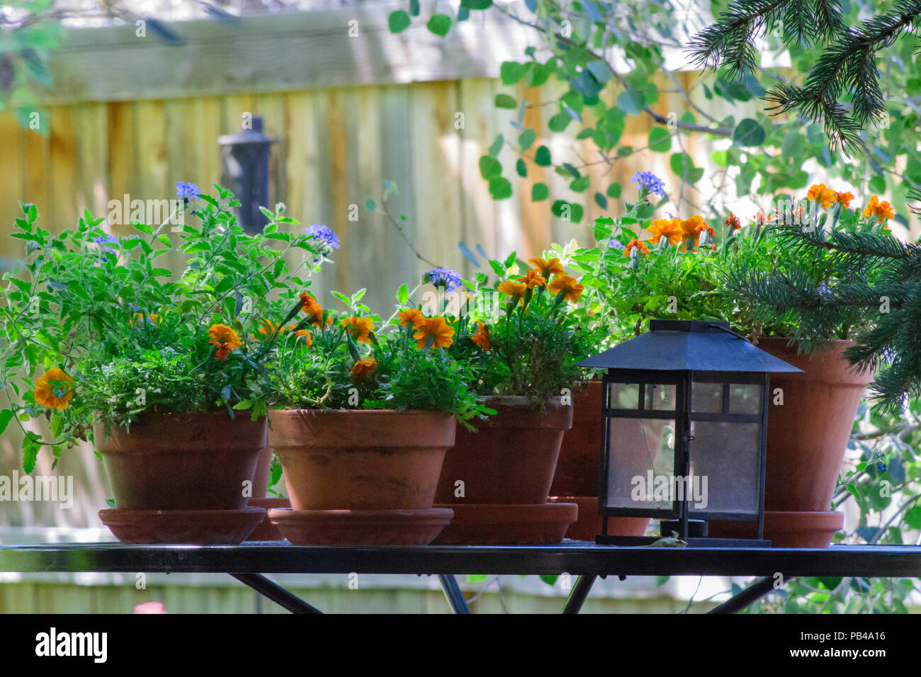 A Table With Potted Flowers And A Lantern In The Back Yard Adding