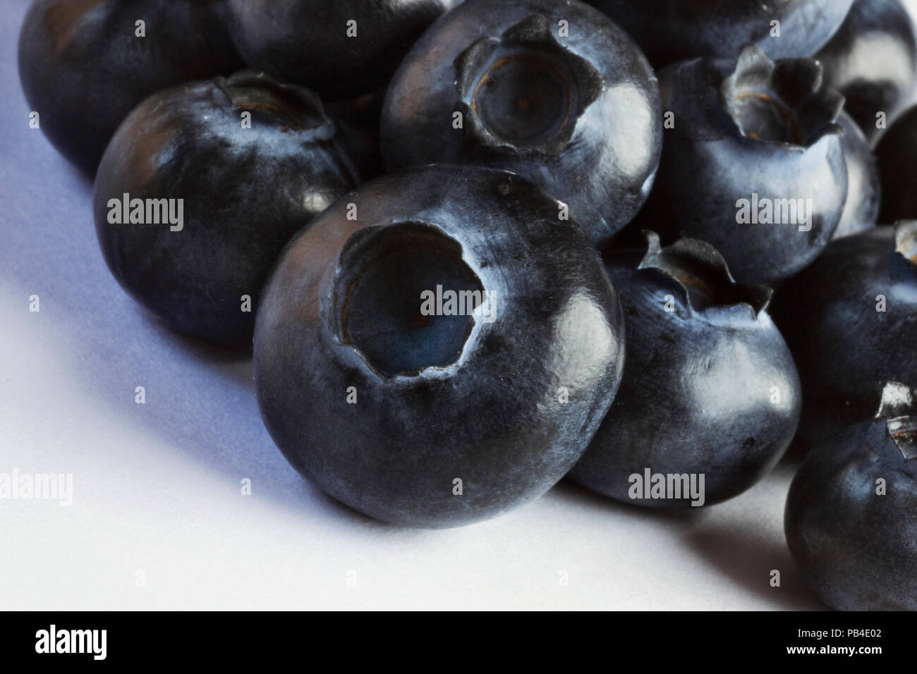 Group of bilberries on a white background ,macro photography ,the light shines the fruits surface , a soft shadow is on the white background - Stock Image