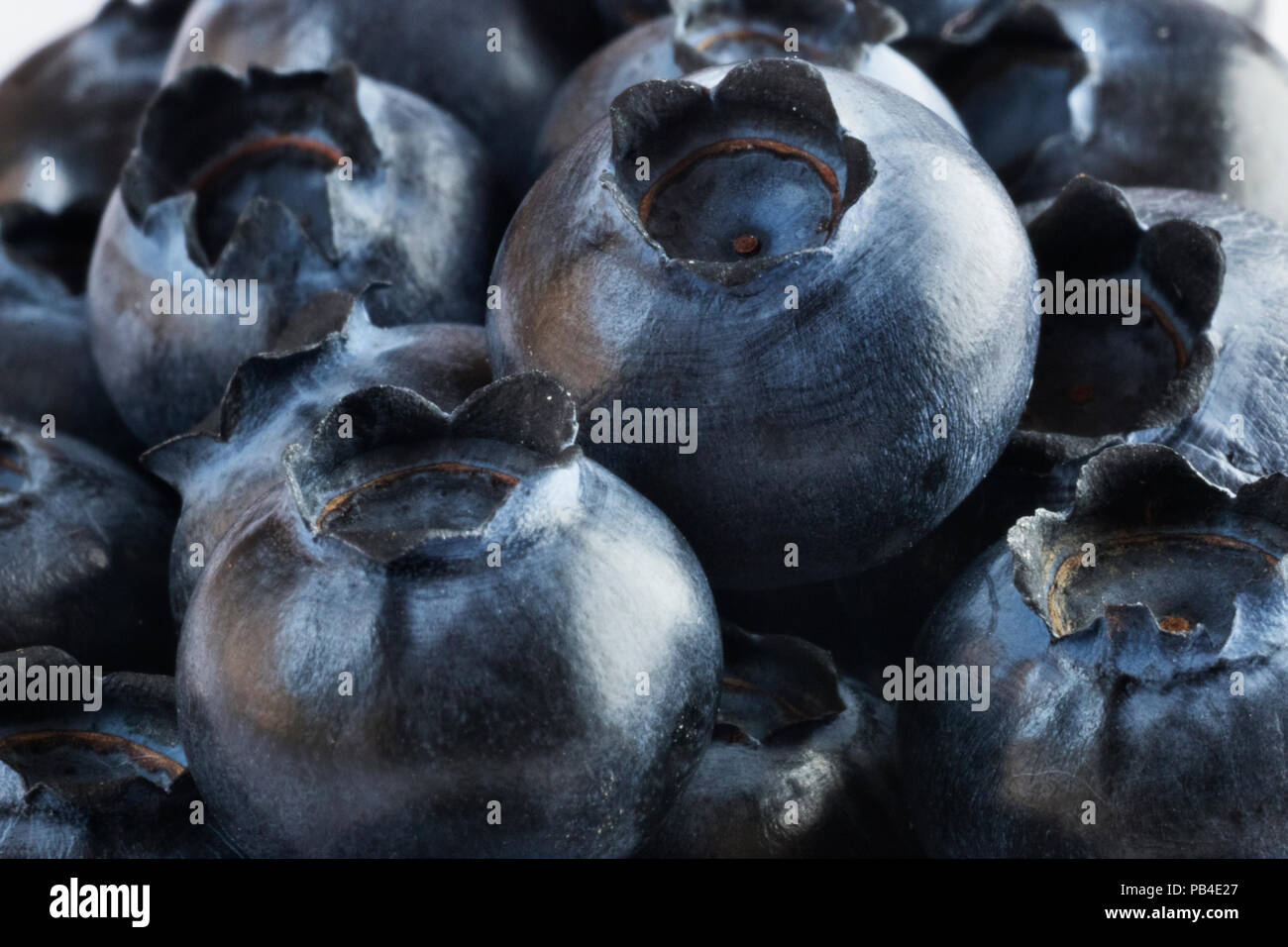 A lot of bilberries  ,studio shot  ,selective focus ,light contrast - Stock Image