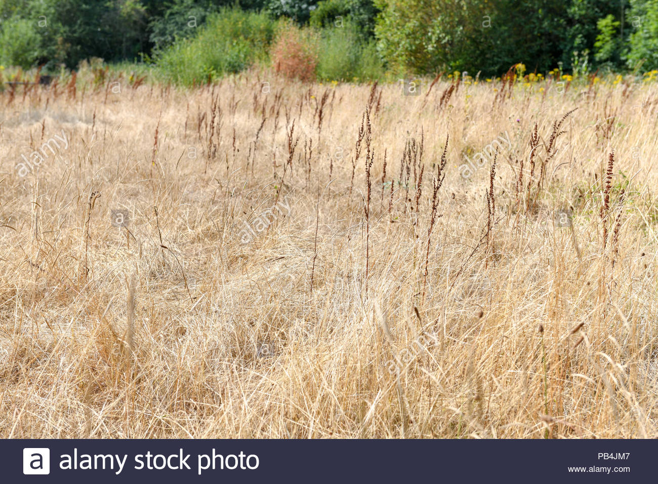 Dried up wildlife ponds surrounded by grassland in Shropshire UK - Stock Image
