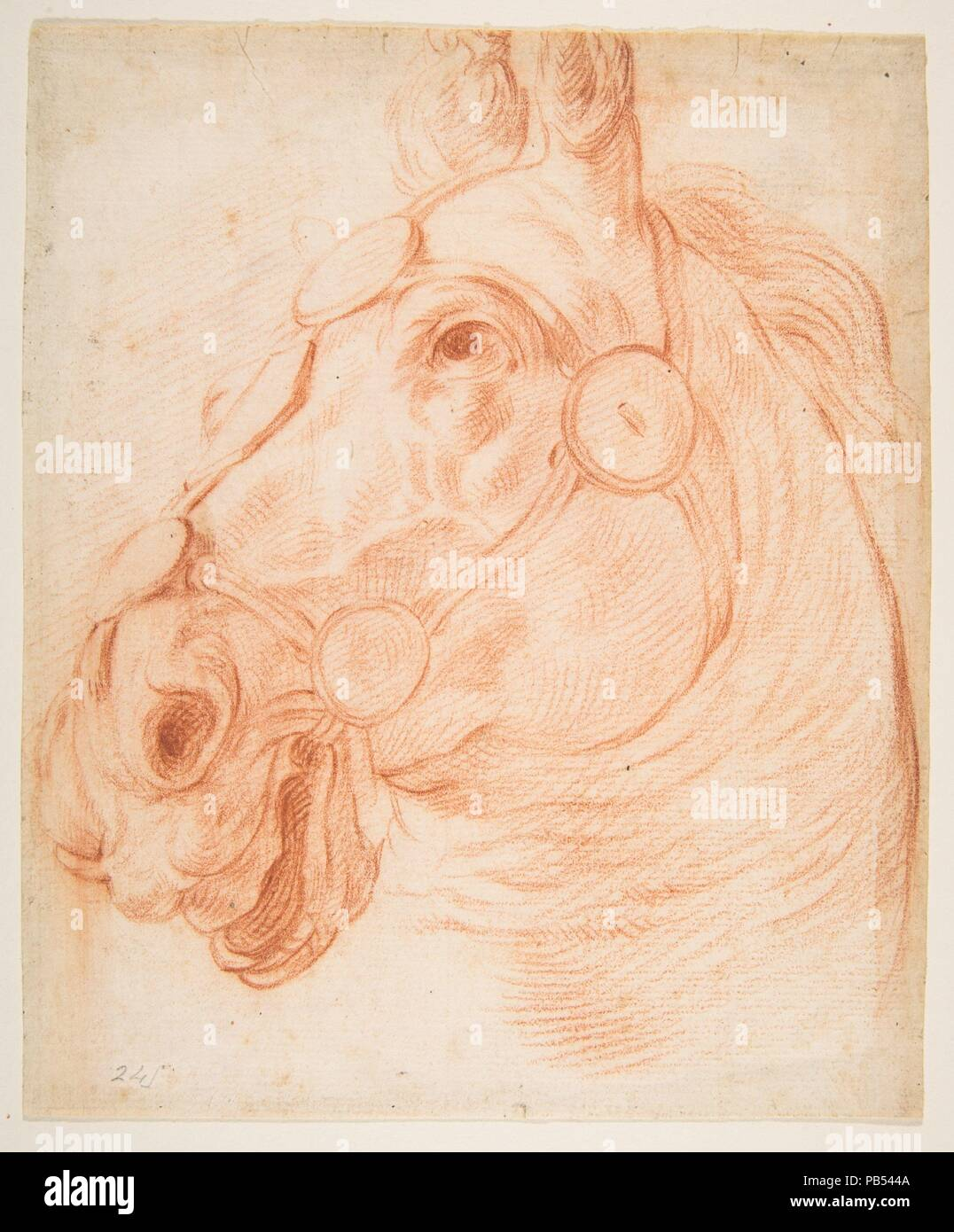 Study for a Horse's Head. Artist: Circle of Baldassarre Franceschini (il Volterrano) (Italian, Volterra 1611-1690 Florence) (?); Previously attributed to Stefano della Bella (Italian, Florence 1610-1664 Florence). Dimensions: 8 x 6 5/8in. (20.3 x 16.8cm). Date: ca. 1650. Museum: Metropolitan Museum of Art, New York, USA. - Stock Image