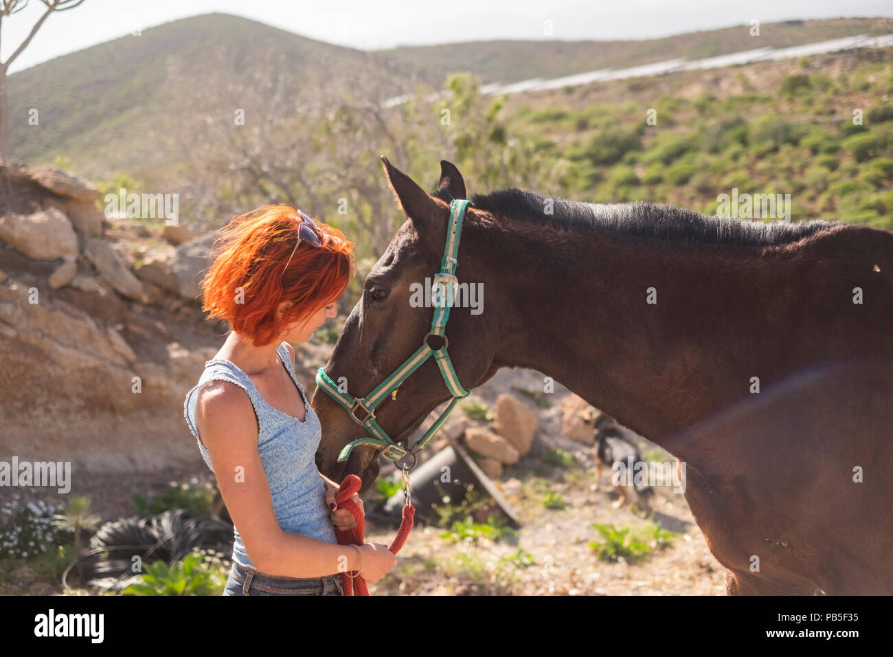 nice red hair alternative female have care of a beautiful horse ready to ride and travel together and discover amazing places. friendship and animal t - Stock Image