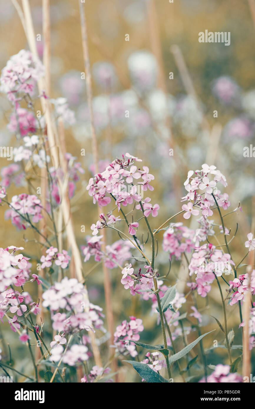 Beautiful Dreamy Red Pink Wild Flowers Blurry Background Toned