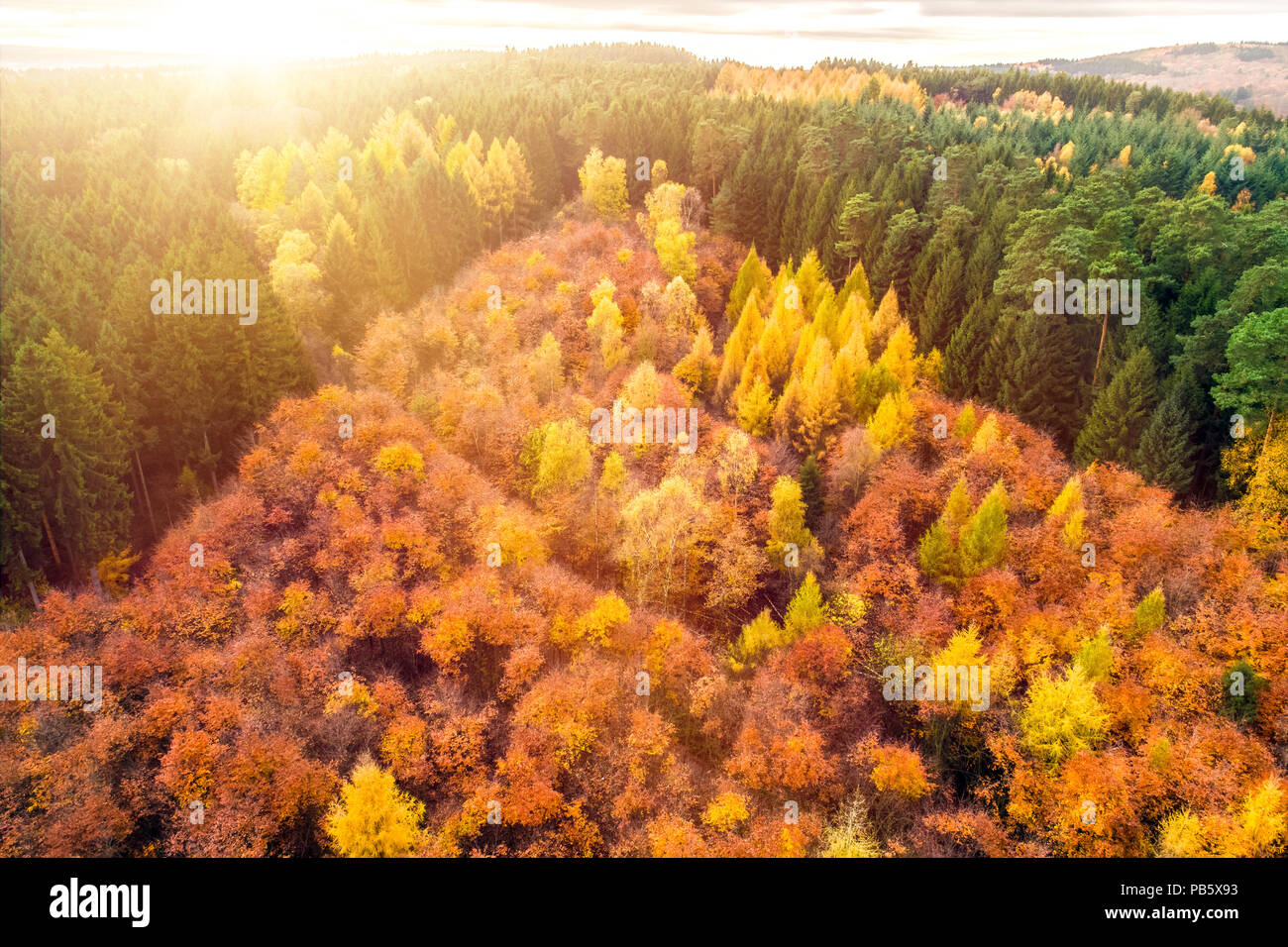 Autumn forest with colorful trees and leafs from above taken during drone flight as background and template - Stock Image