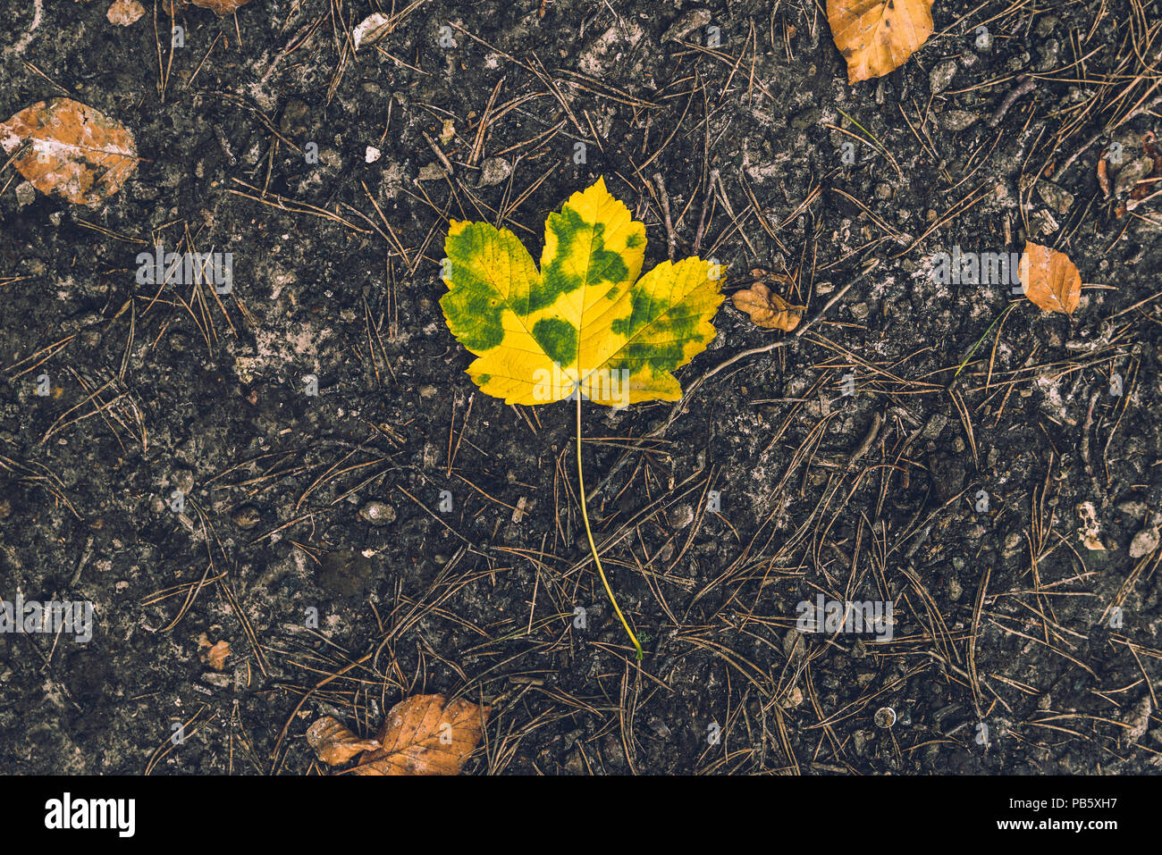 autumn leaf from above against brown soil ground taken from above as