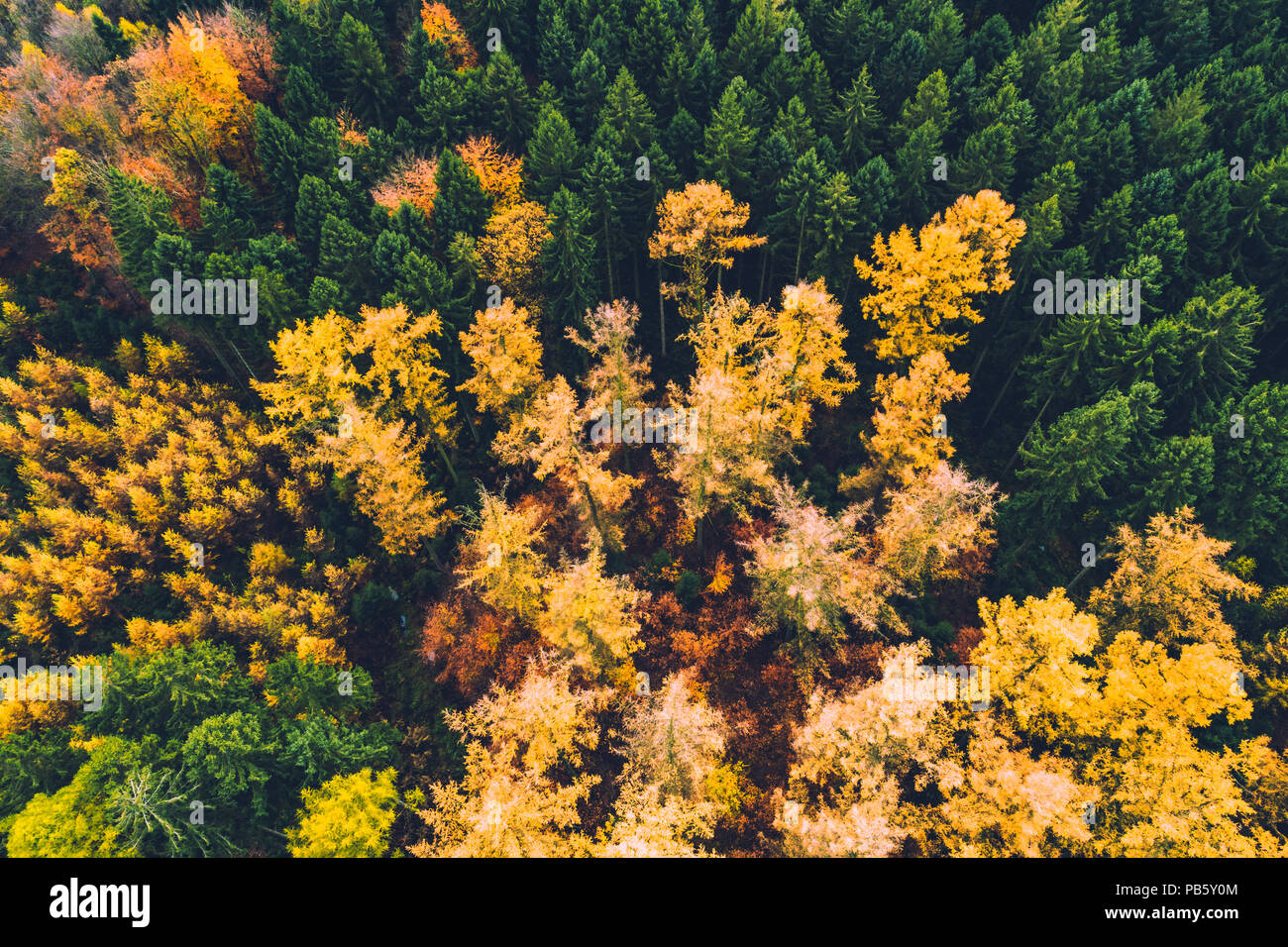 Autumn forest with colorful trees and leafs from above in aerial view taken during drone flight as background and template - Stock Image
