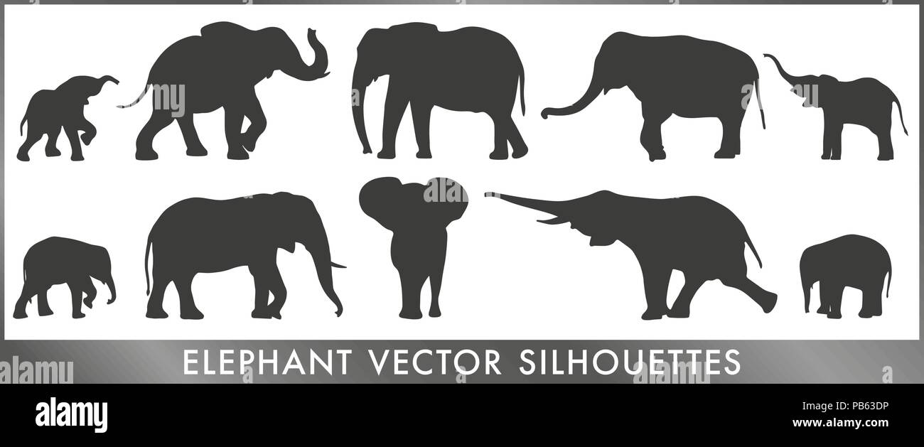 A group of small and big elephant silouettes - vector graphic. - Stock Image