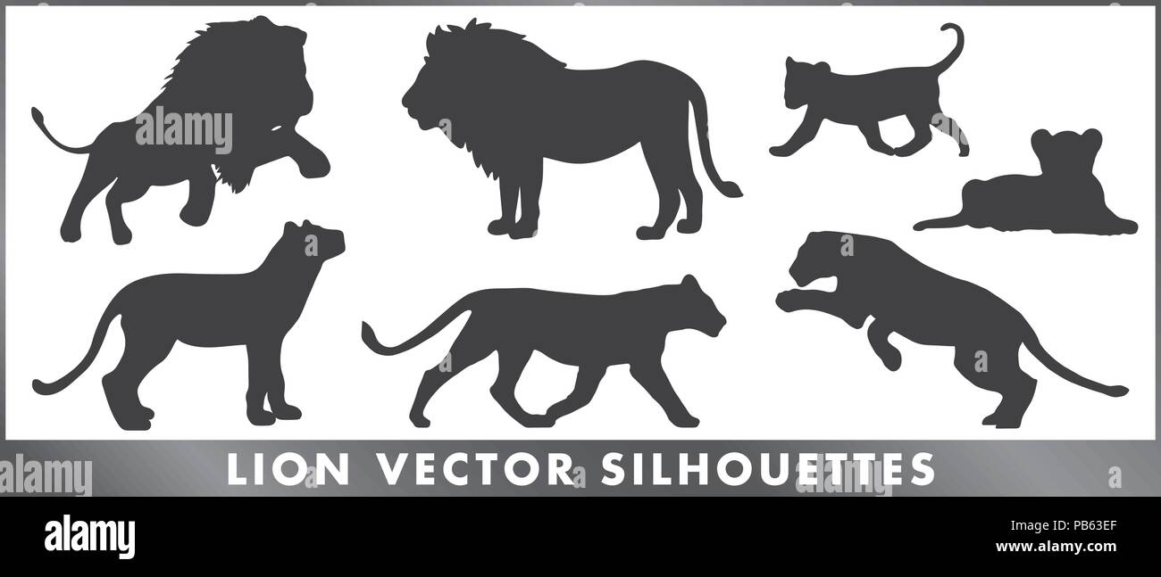 A group of lion silouettes - vector graphic. - Stock Image