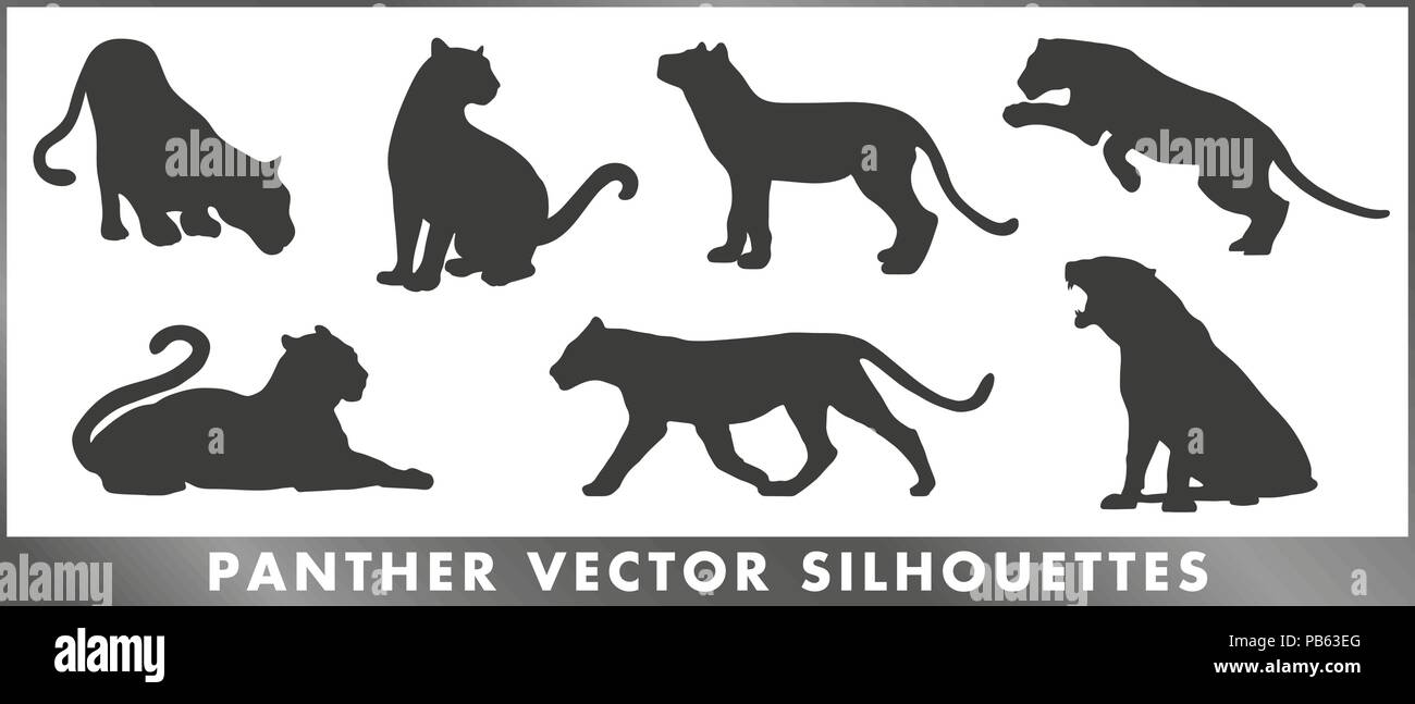 A group of panther silouettes - vector graphic. - Stock Image