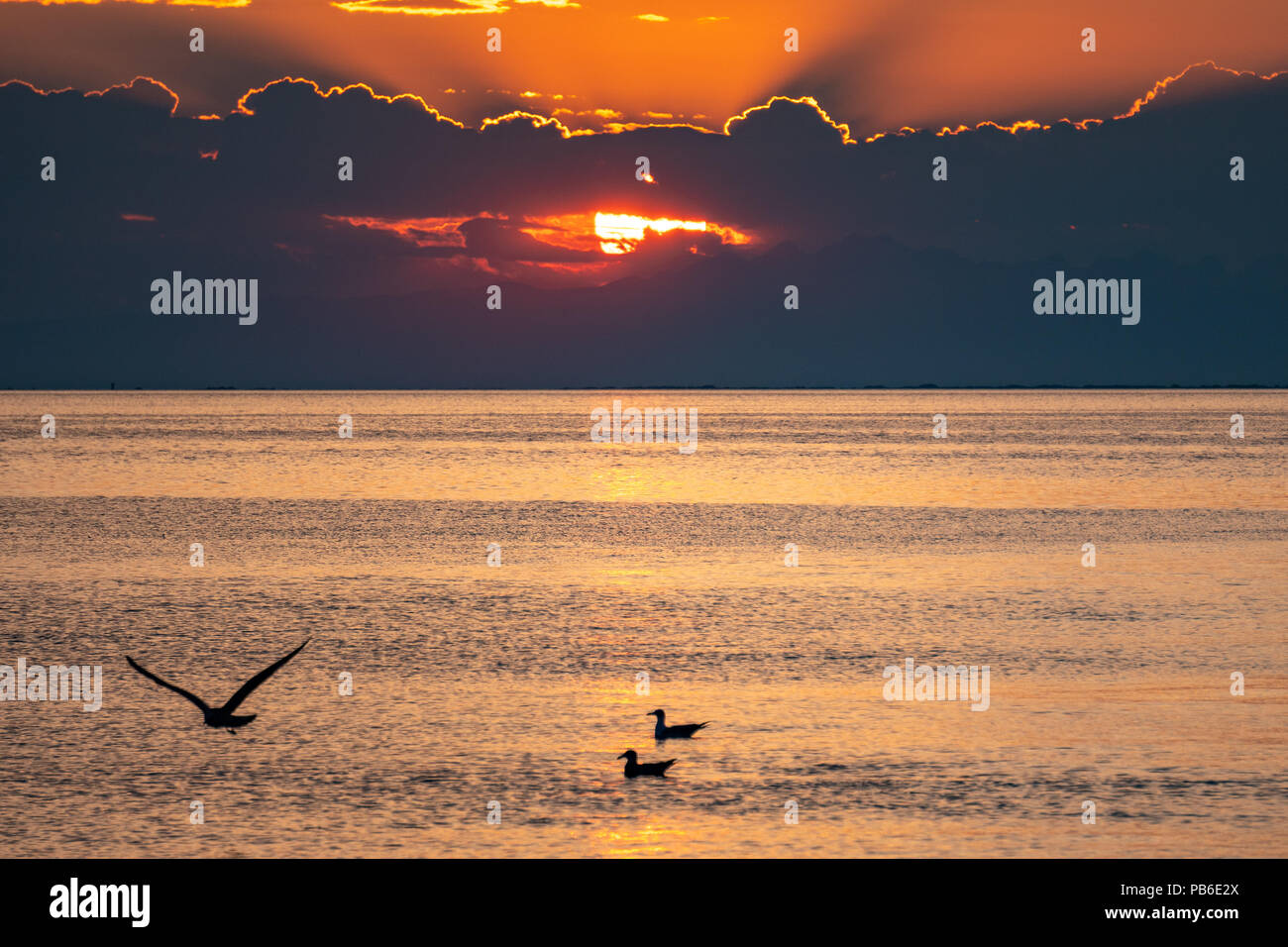 Trieste, Italy, 26 July 2018.  Seagulls at sunset in the Adriatic port of Trieste in northern Italy.  Photo by Enrique Shore - Stock Image