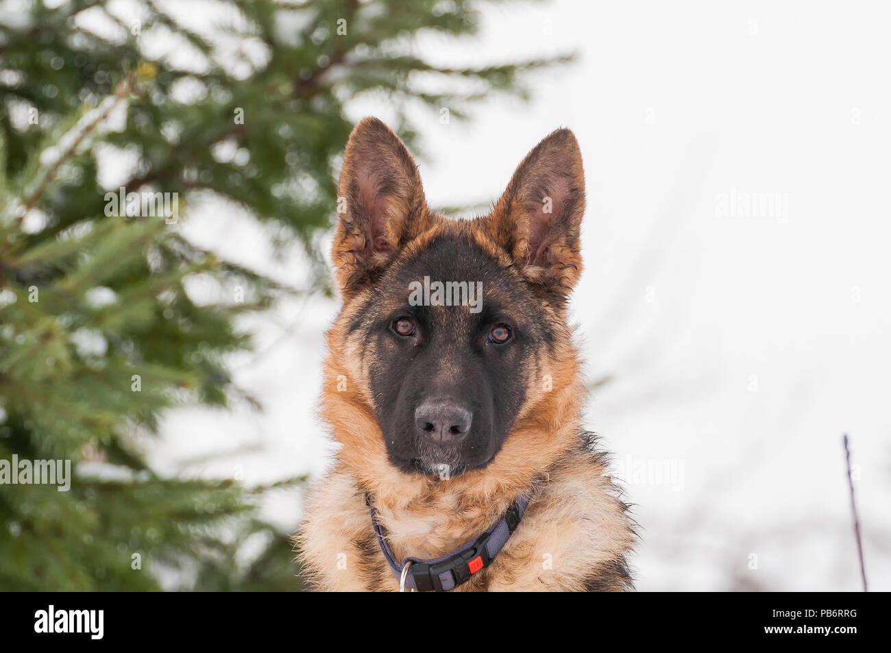 Police Dog Training Stock Photos & Police Dog Training Stock