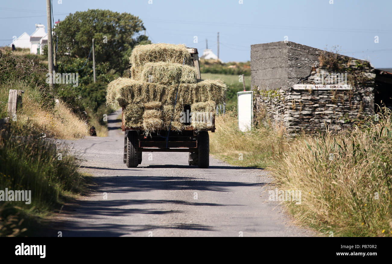 Haymaking on Heir Island - Stock Image