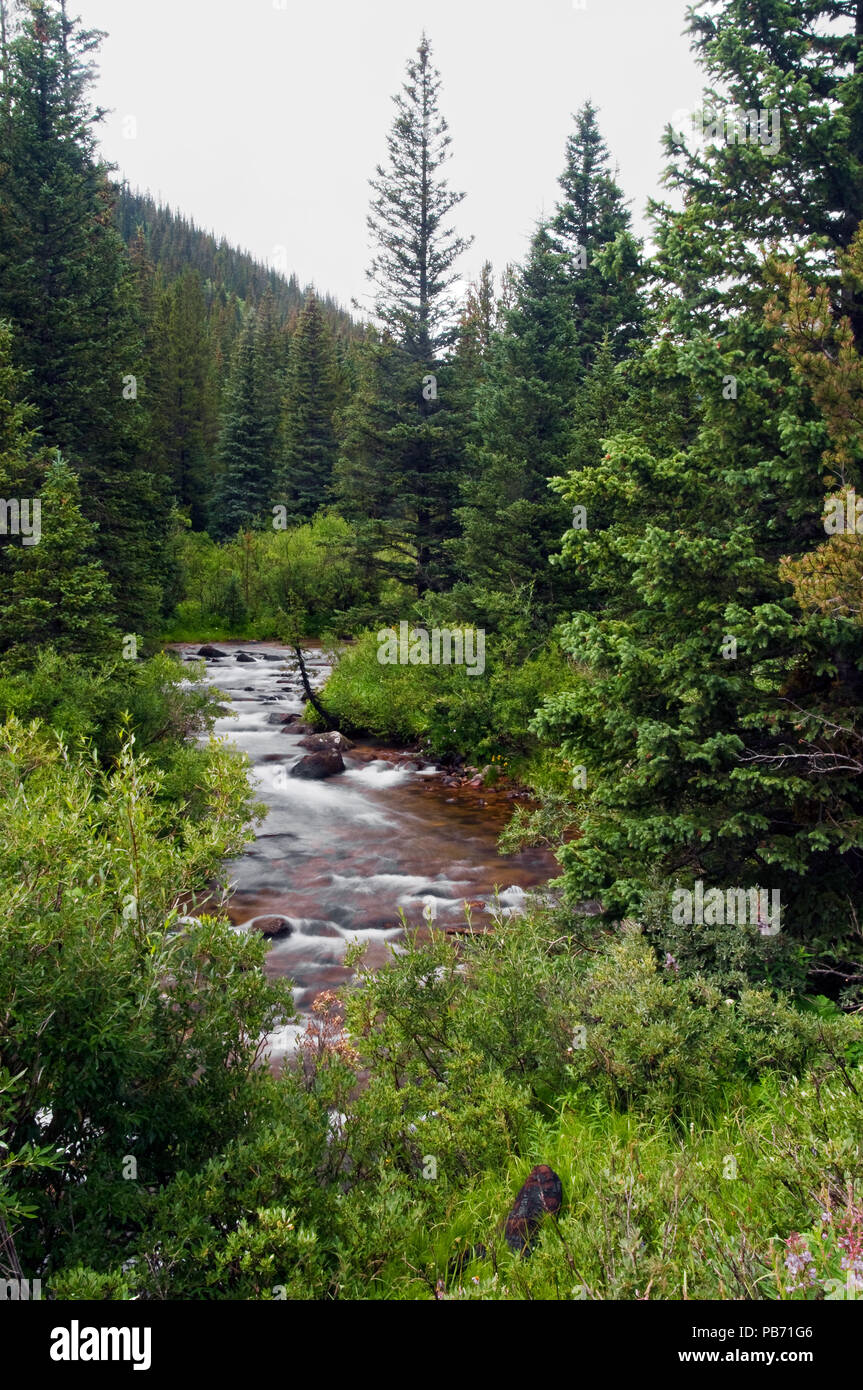 Tall Trees and Flowing Waters in the Rocky Mountains Colorado Arapaho National Forest - Stock Image