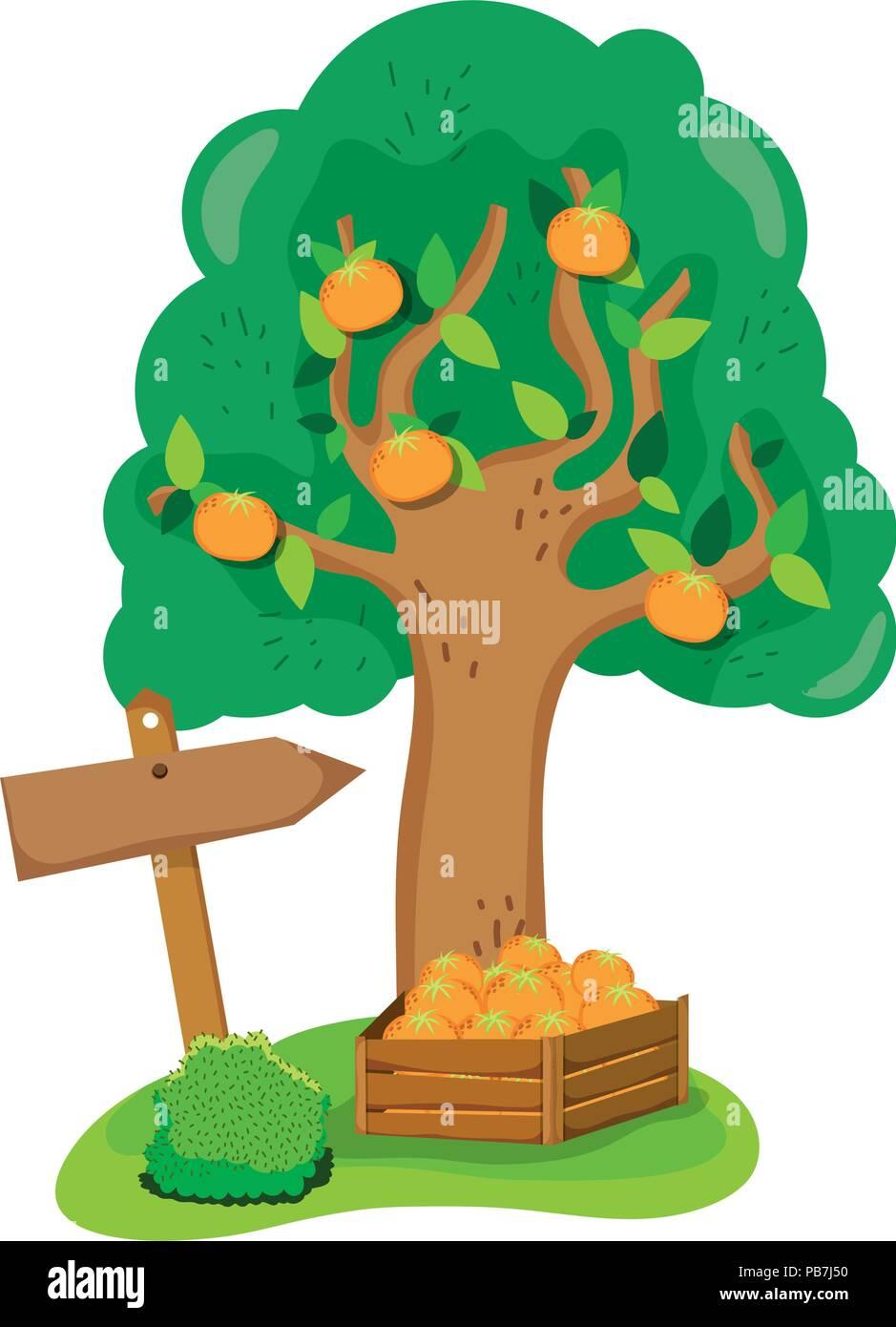 farm fruit tree and oranges inside wood box - Stock Vector
