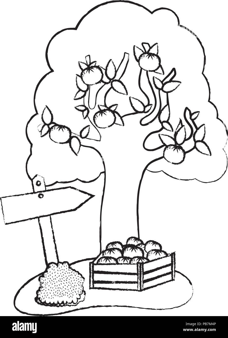 grunge farm fruit tree and oranges inside wood box - Stock Vector