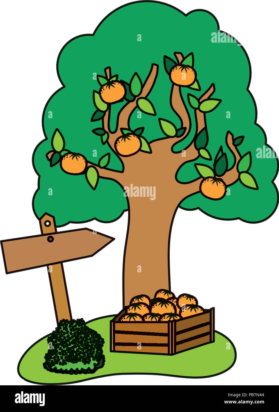 color farm fruit tree and oranges inside wood box - Stock Vector
