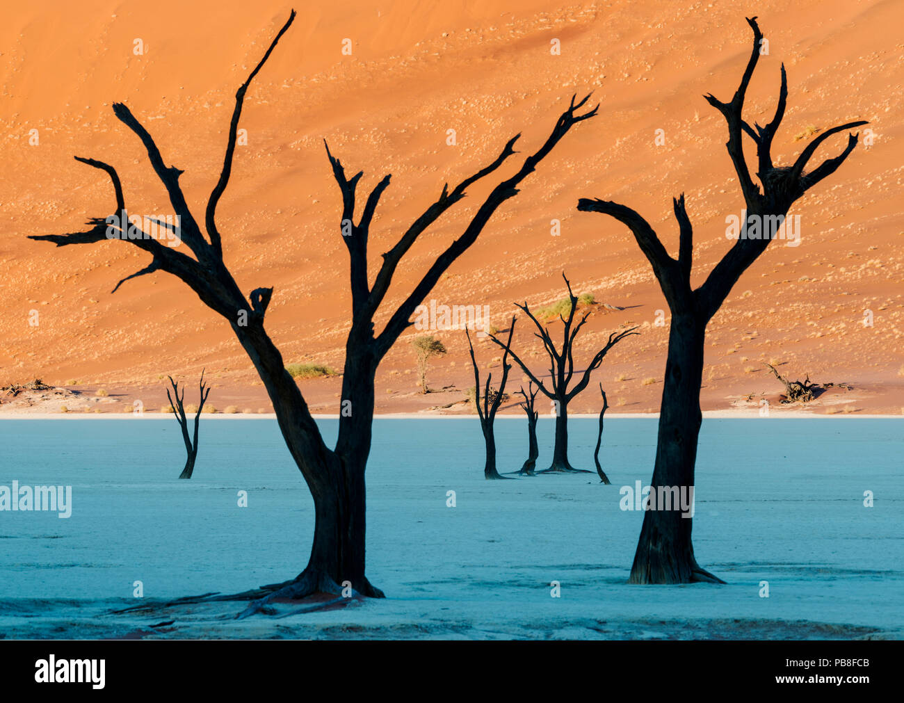 Dead Vlei, with dessicated 900 year old trees standing in the salt pan surrounded by towering red sand dunes. Namib-Naukluft National Park, Namibia. June 2013. - Stock Image