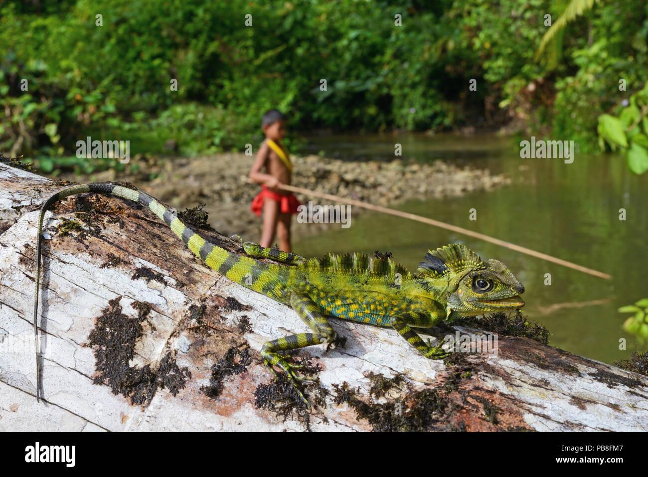Giant forest dragon (Gonocephalus grandis) and Mentawai boy fishing, Siberut, Sumatra.  July 2016. - Stock Image