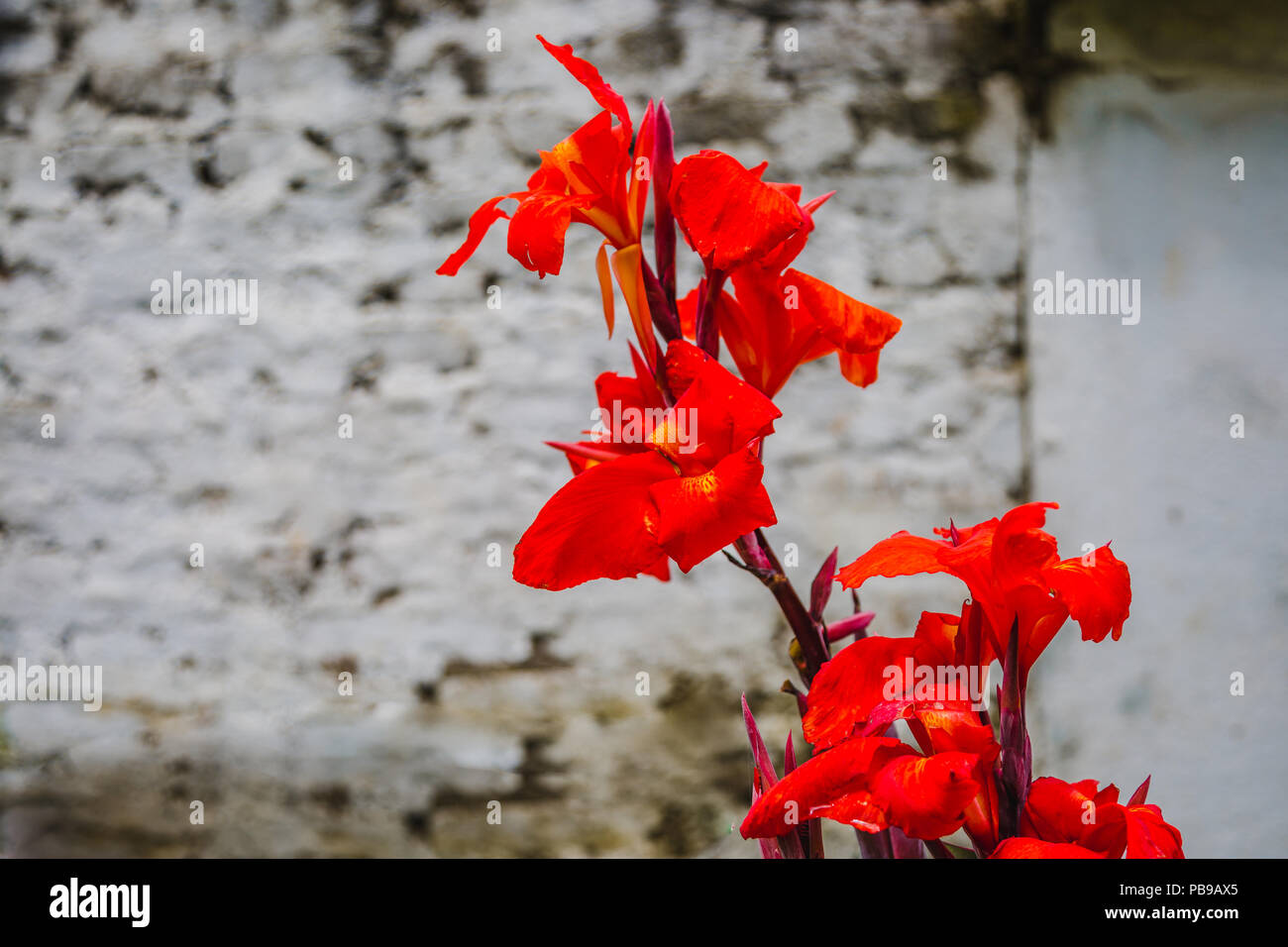 Abstract Natural Nature Red Flowers Background Spring And Summer