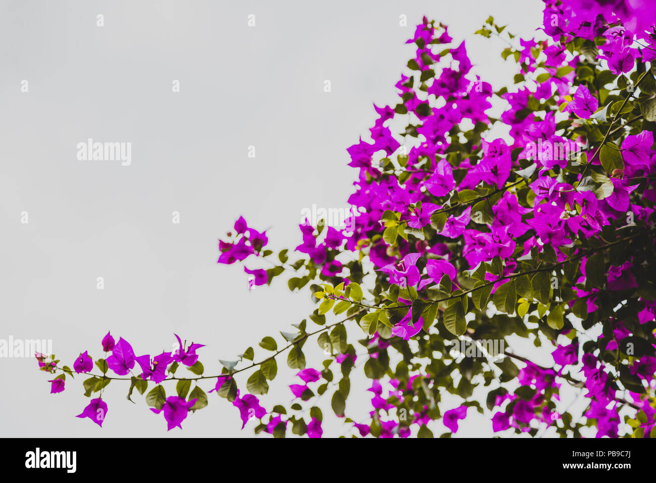 Abstract Natural Nature Pink Flowers Background Spring And Summer