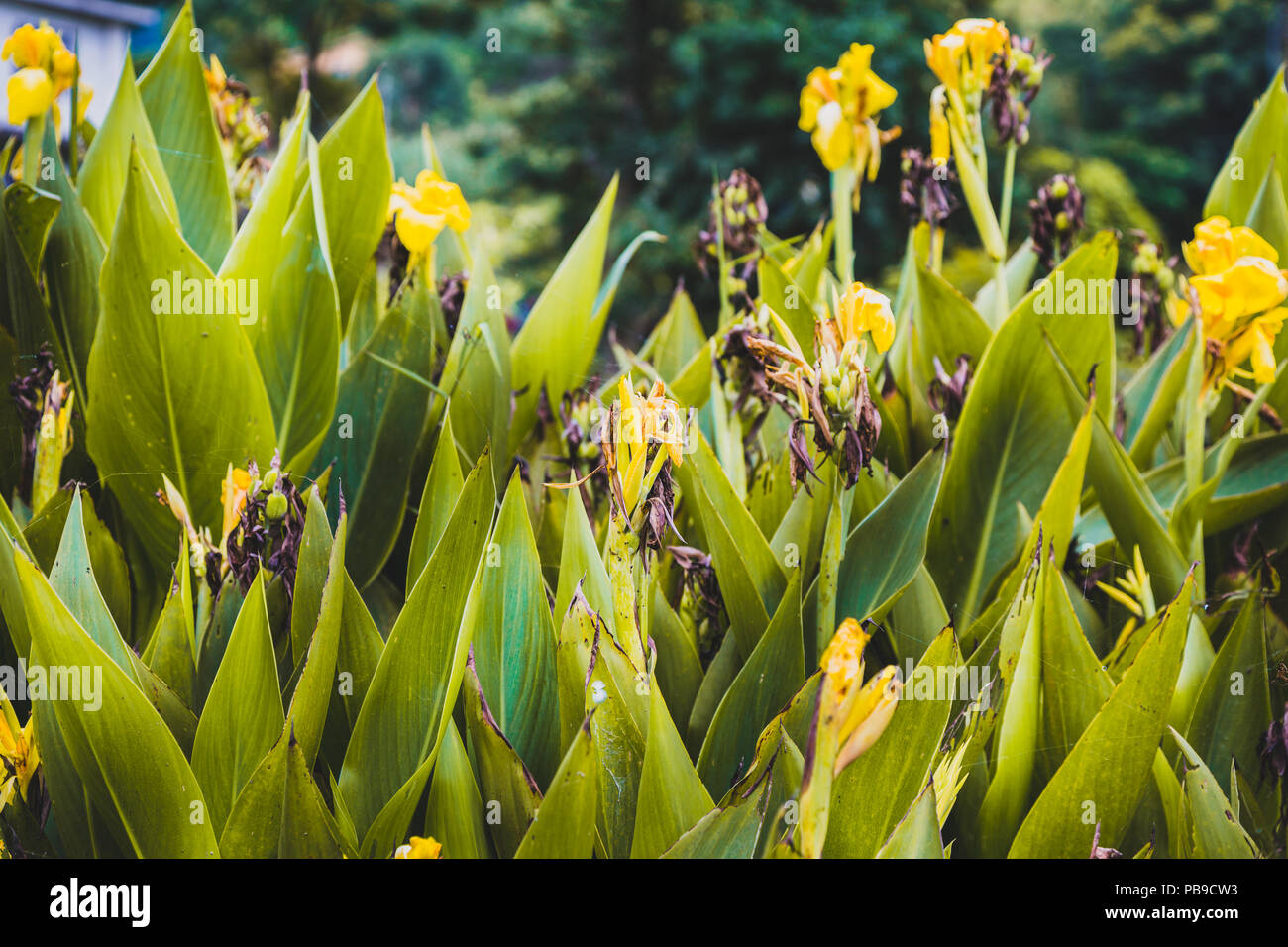 Abstract Natural Nature Yellow Flowers Background Spring And Summer