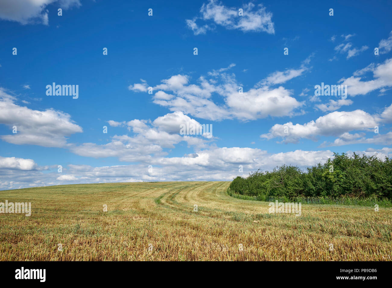 Harvested wheat field with cloudy sky, district Konstanz, Baden-Württemberg, Germany - Stock Image