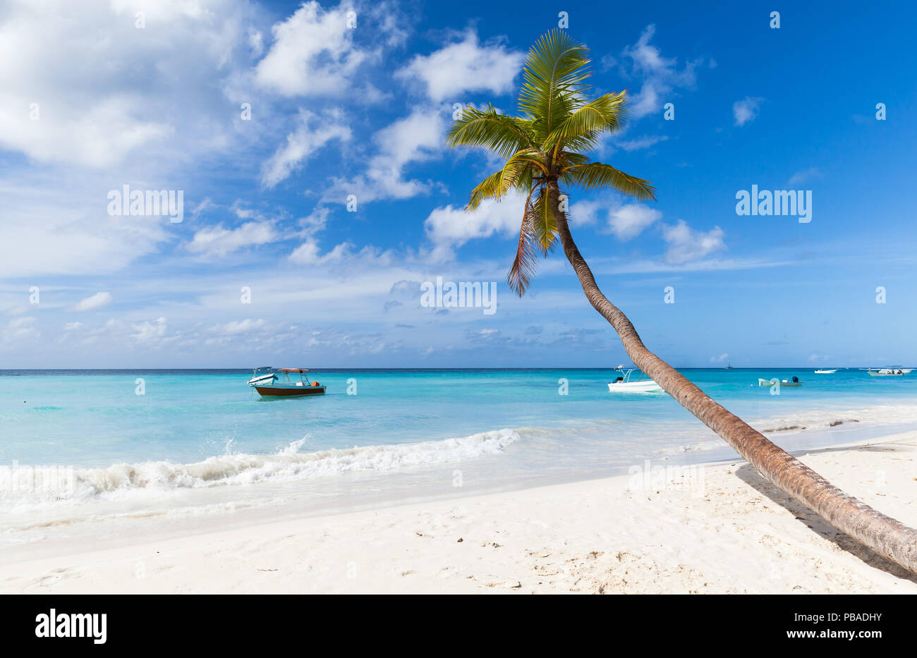 Coconut palm tree grows on white sandy beach of Saona island. Caribbean Sea coast, Dominican republic Stock Photo