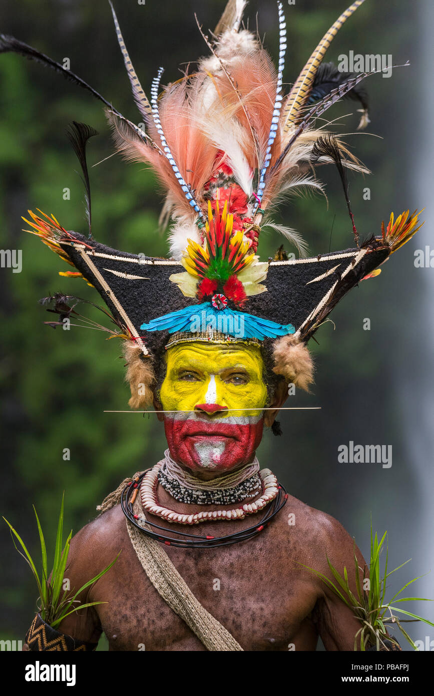 Chief Timon Tumbu Huli Wigman in traditional / ceremonial dress with plumes of Birds of Paradise, parrots and lorikeets. Tari Valley, Papua New Guinea. - Stock Image