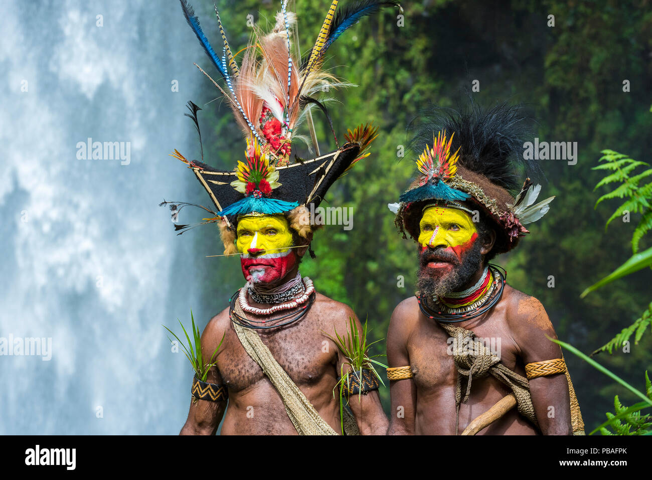 Huli Wigmen (chief Timon Tumbu and Haro Ngibe) in traditional / ceremonial dress with plumes of Birds of Paradise, dwarf cassowary, parrots and lorikeets. Tari Valley, Papua New Guinea. June 2016. - Stock Image