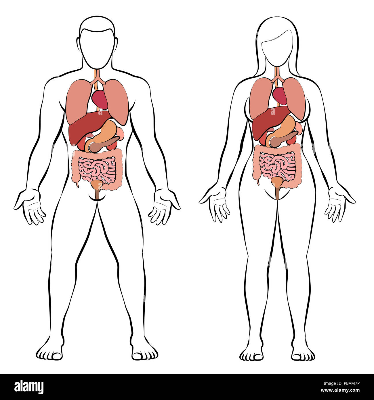 Digestive Tract With Internal Organs Male And Female Body