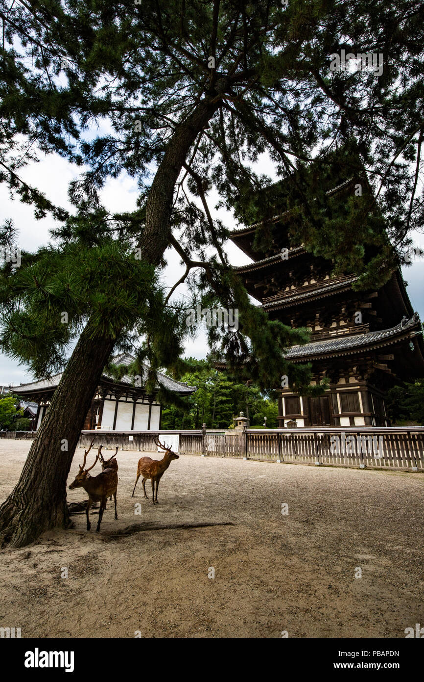 Kofukuji was once an important center for Buddhism in Japan.  Since it was established by the Fujiwara clan who ruled Japan at the time, it also retai - Stock Image