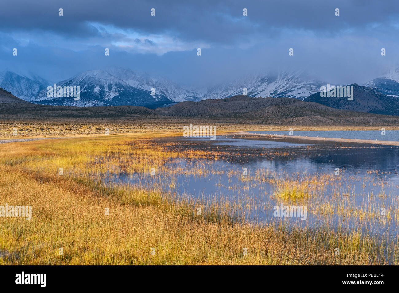 Approaching Storm, Mount Gibbs, Mount Dana, Wetlands, Mono Lake, Mono Basin National Forest Scenic Area, Inyo National Forest, Easternm Sierra, Califo - Stock Image