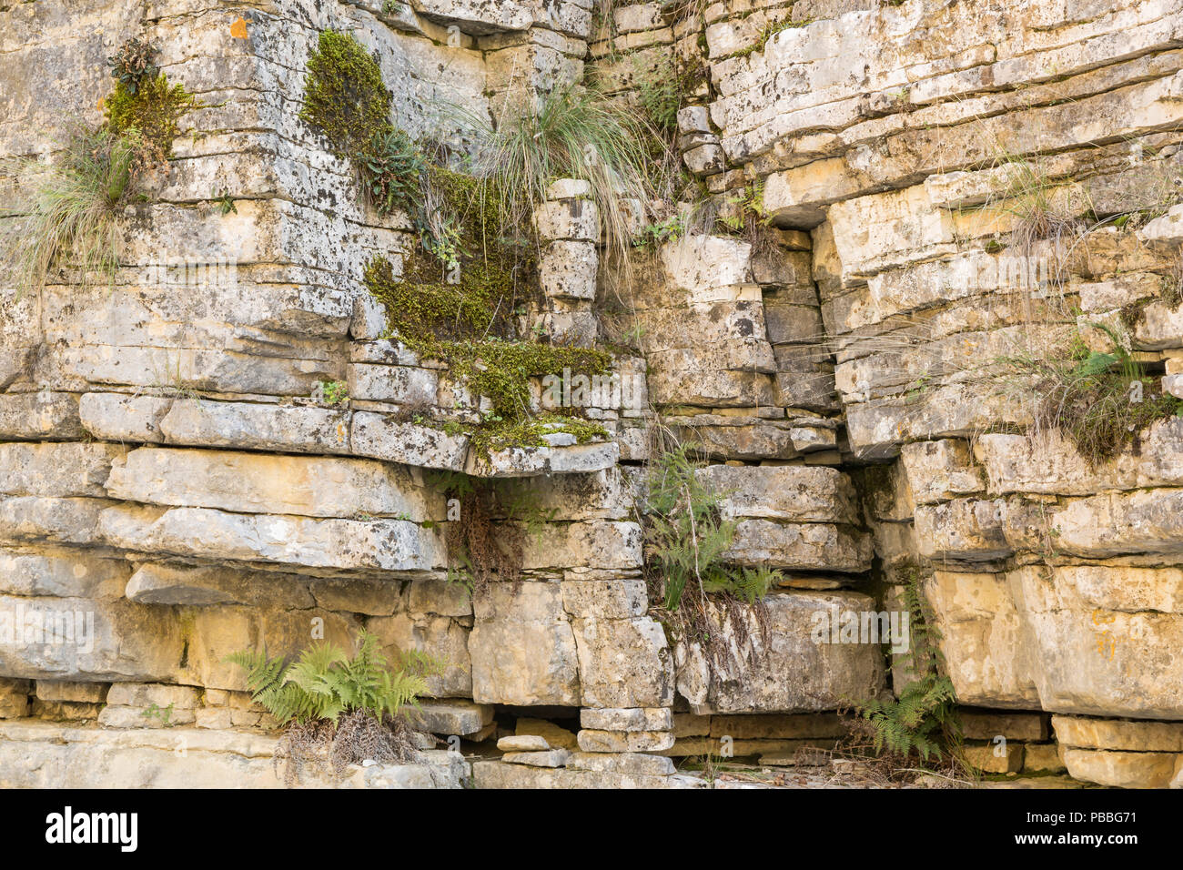Plants thriving on a barren rock face - Stock Image