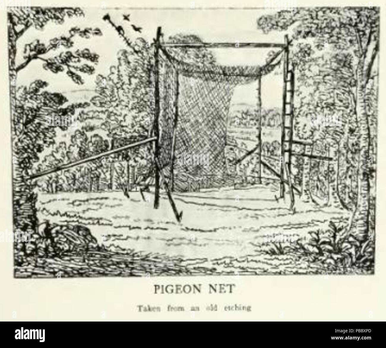 1153 Page The Passenger Pigeon - Mershon djvu 254 - Pigeon net