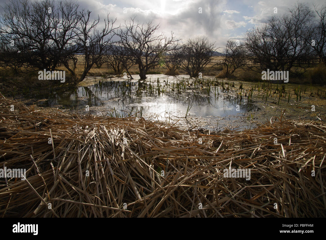 Endangered Species Conservation Site, A Ranching/Conservation Cooperative Project, The Frog Project, A National Fish and Wildlife Foundation Sponsored Stock Photo