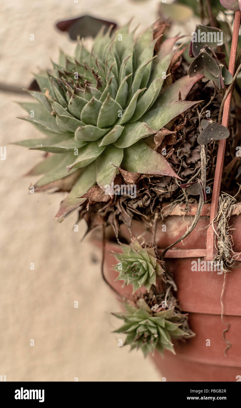 Garden plants, outdoor photographs at every moment of the day ...