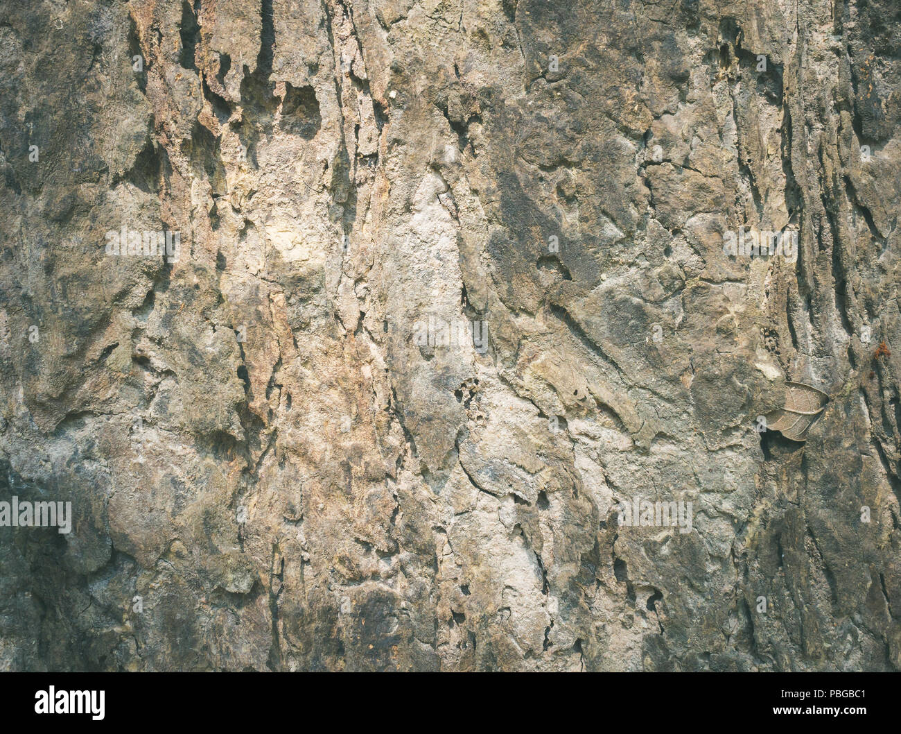 Brown tree Bark Texture Background. Natural tree bark texture for design - Stock Image