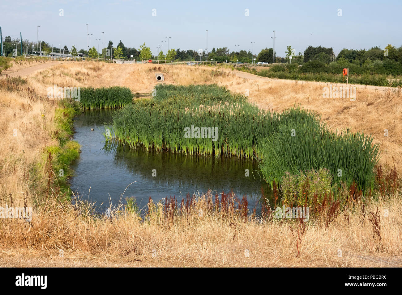 Oasis habitat in danger of drying out during the UK summer heatwave 2018 - Stock Image