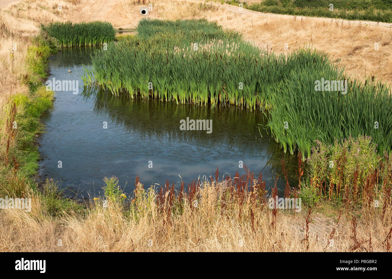 A shrinking wetland habitat under threat during the UK summer heatwave Stock Photo